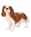 Honden beelden bruine King Charles hond