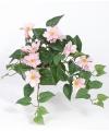 Bosje kunst clematis roze 60 cm