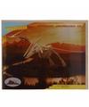Houten Pteranodon dinosaurier